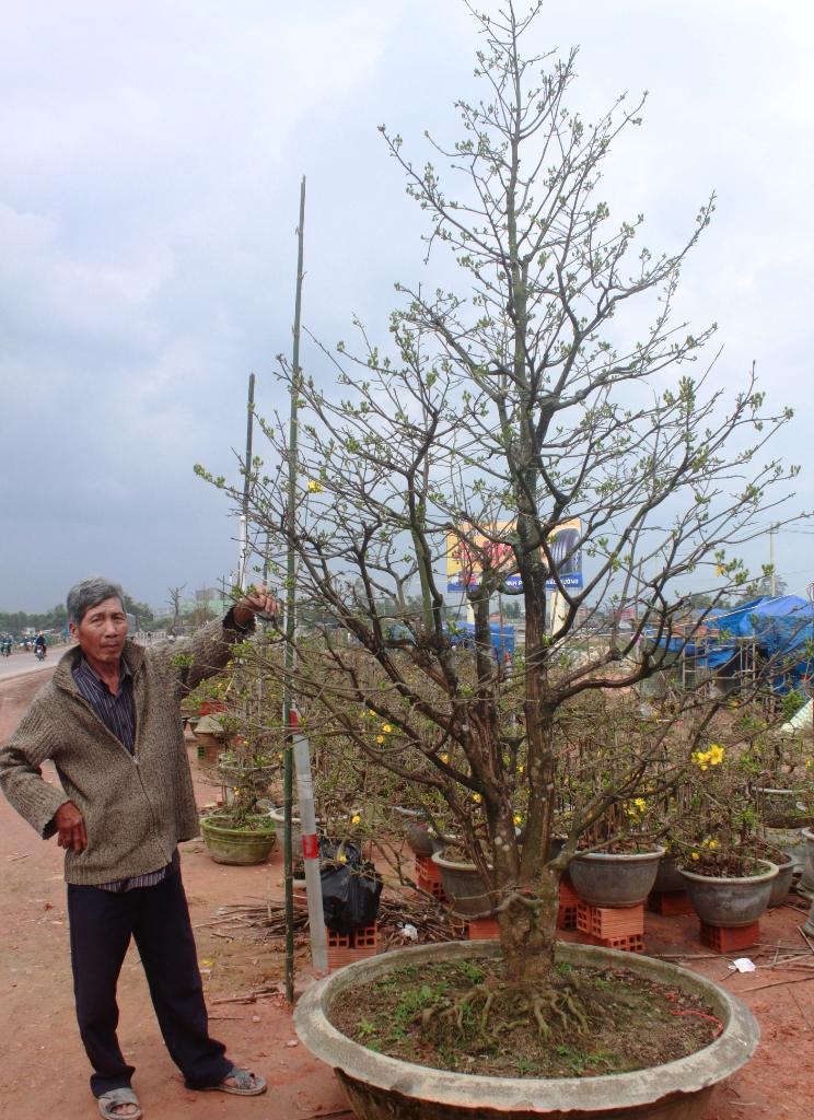 Ngoài ra, ông Dũng cũng đang sở hữu cây thanh mai hương lùm có giá 30 triệu đồng