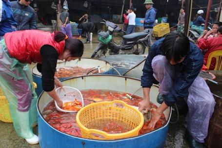 Giá cá chép vàng loại này dao động từ 50-60 nghìn đồng/kg.