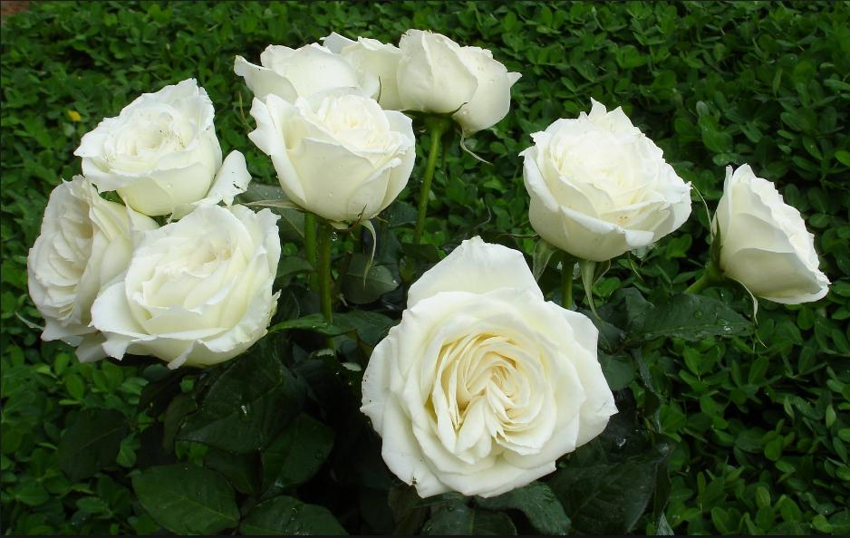 Cách làm hoa đa sắc mang Xuân về nhà