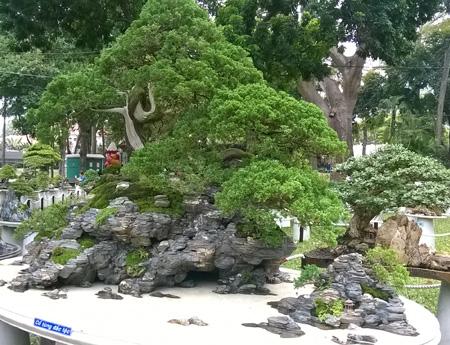 Một số gốc bonsai khác được tạo hình thành những hòn non bộ