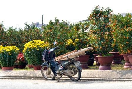 Phương tiện chở hoa là chiếc xe máy