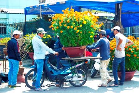 Cẩn thận xếp từng chậu hoa lên xe chở đến nhà cho khách hàng