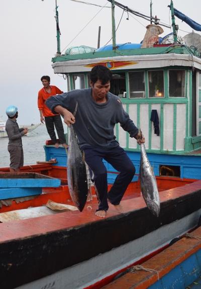Những con cá ngừ trở về sáng 28 tháng Chạp.
