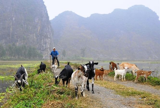 Trứ danh dê núi Ninh Bình...