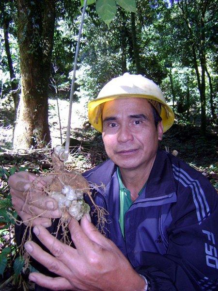 Vua sâm Ngoc Linh: Khu vườn trăm tỷ trên đỉnh Trường Sơn
