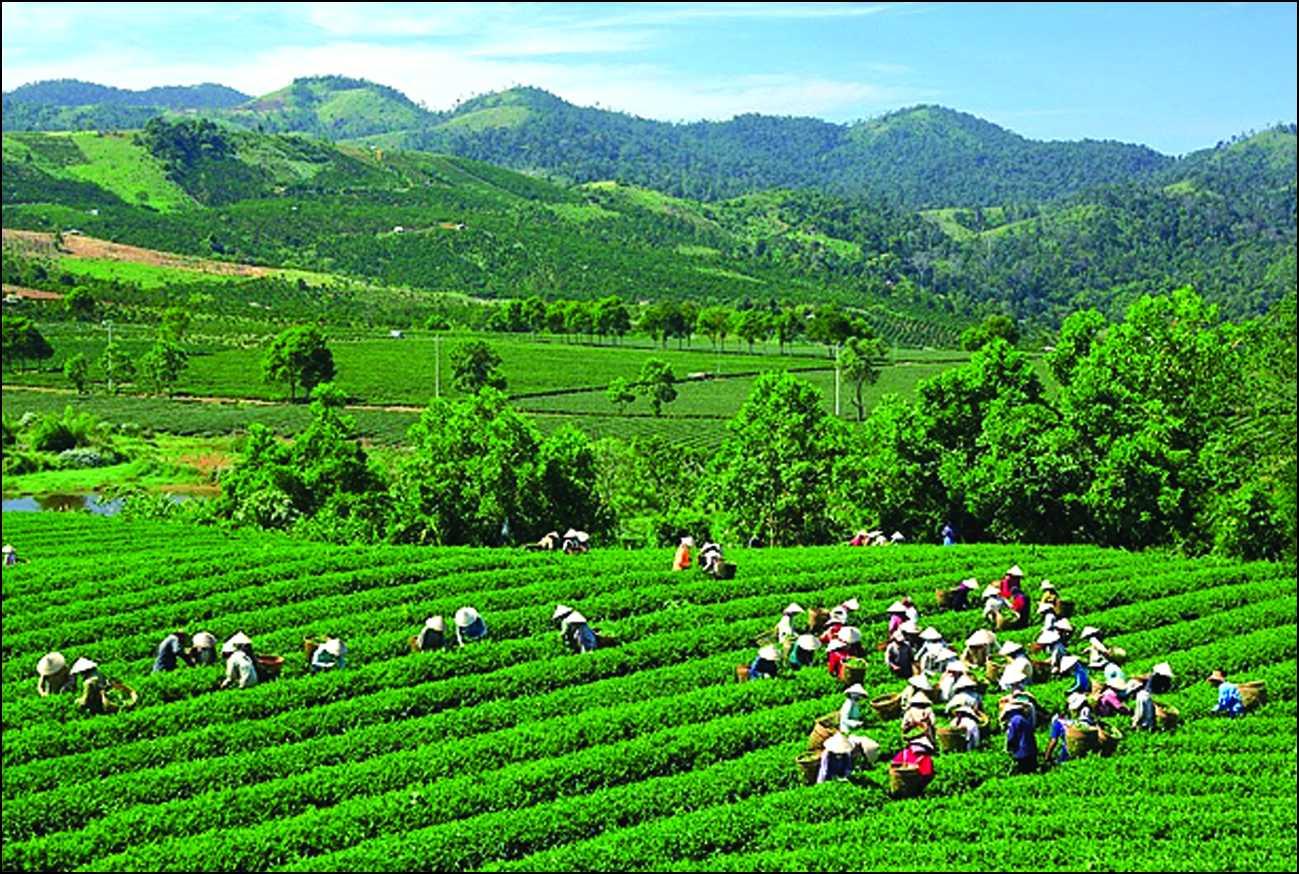 Hướng thu nhập người dân Thái Nguyên đến 3.100 USD