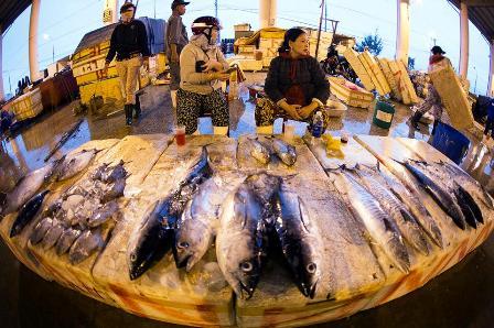 Chợ cá Thọ Quang bán mua xuyên đêm