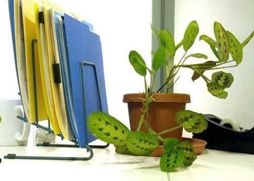 Chọn và bài trí cây xanh trên bàn làm việc hợp phong thủy