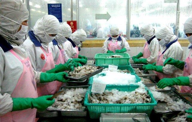 Thuế chống bán phá giá tôm Việt Nam vào Mỹ giảm mạnh