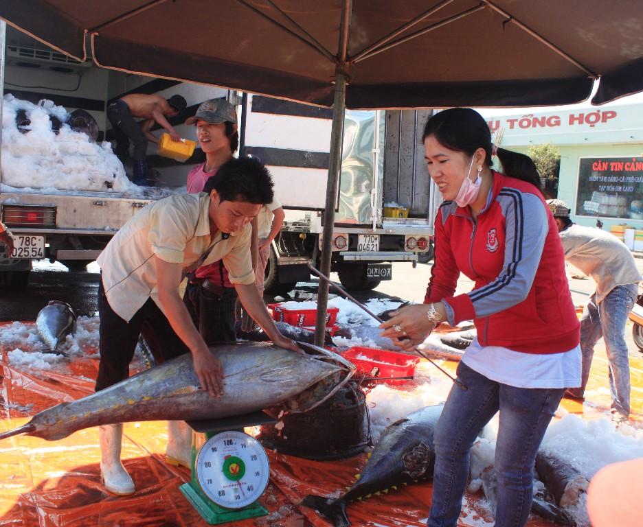 Thương lái kiểm tra chất lượng cá ngừ đại dương để phân loại cá mới áp giá cho cá loại 1, loại 2...