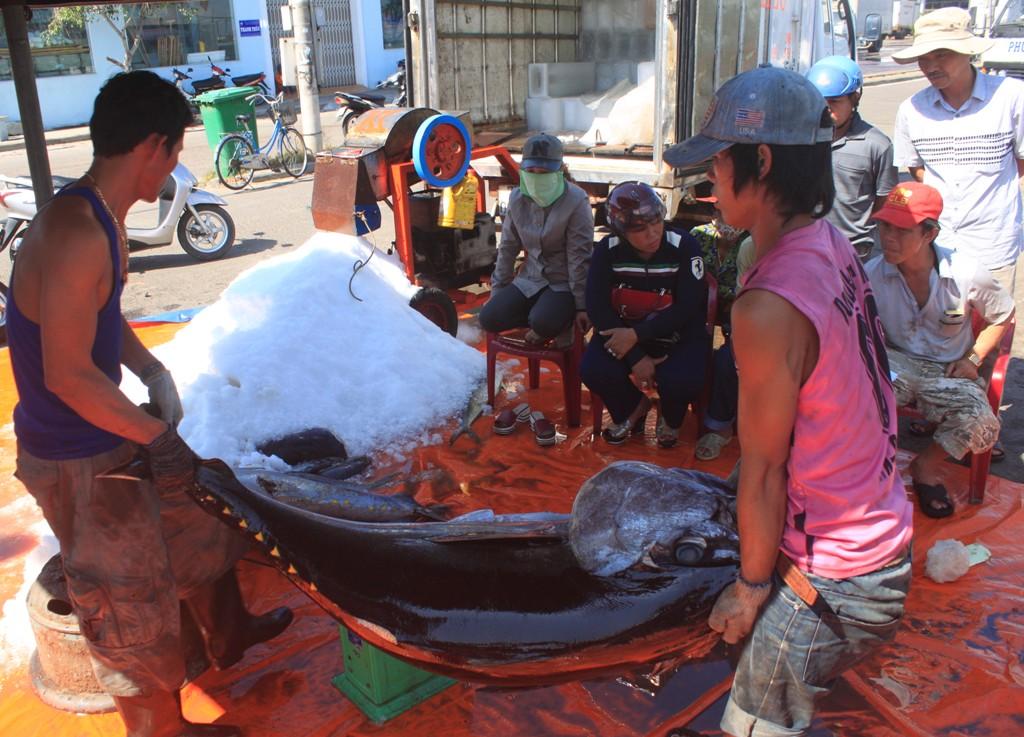 Có tàu chỉ câu được 5 con cá ngừ đại dương và vài tấn cá sọc dưa, cá thu... bán không đủ tổn