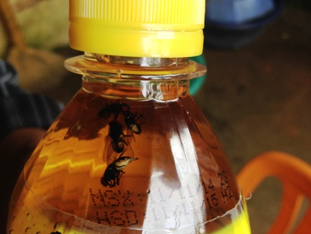 Chai nước giải khát nhãn C2 có... 5 con ruồi