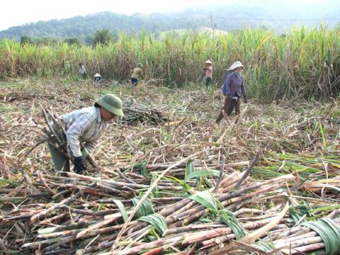 'Góc khuất' ngành mía đường:Người trong ngành vạch áo...