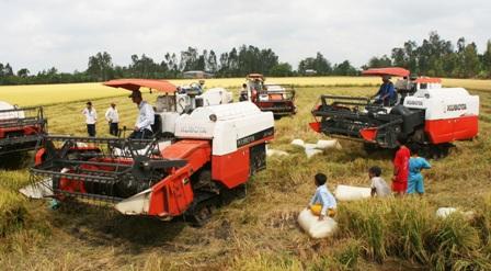 Mua tạm trữ 1 triệu tấn gạo: Giá không