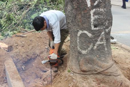Thành ủy Hà Nội yêu cầu hạn chế loại bỏ cây xanh