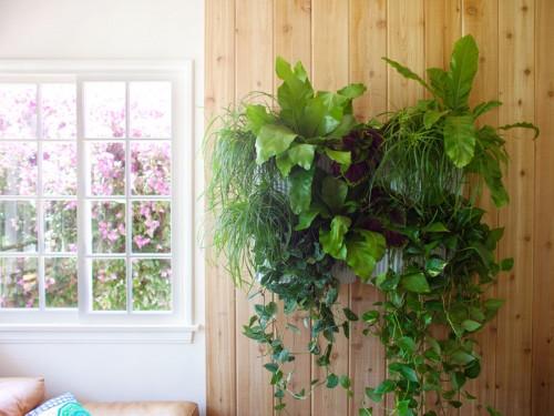 Tạo khu vườn mini cho không gian nhỏ hẹp