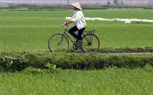 Việt Nam trong cuộc đua ảnh hưởng kinh tế Trung-Nhật