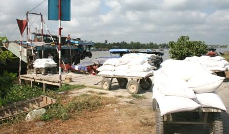 Thu mua lúa tạm trữ: Lúa giảm giá vì kinh, mương cạn kiệt?