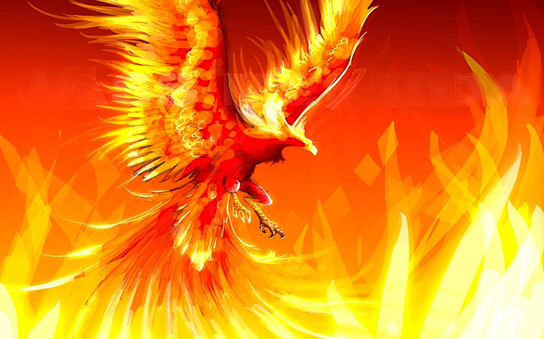Phượng hoàng đỏ đại diện cho sức mạnh và nghị lực