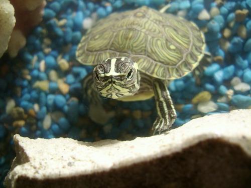Rùa là biểu tượng phong thủy thiêng liêng mang lại nhiều may mắn và tài lộc