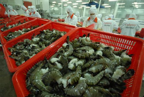 Mỹ từ chối nhập khẩu tôm hàng loạt vì nhiễm kháng sinh