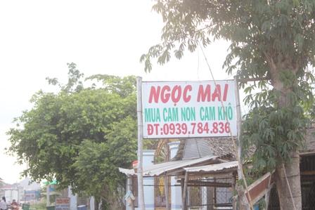 Trưng bảng mua cam non, cam khô tại huyện Trà ôn (Vĩnh Long)