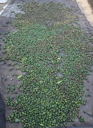 Những quả cam bé xíu cũng được mua với giá 2.000 đồng/kg