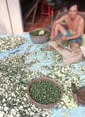 Ông Tồn được thuê xắt cam non với giá 500 đồng/kg