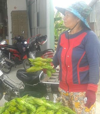 Cơ quan chức năng đang ra sức tuyên truyền, ngăn chặn việc thu gom nông sản lạ đời của thương lái