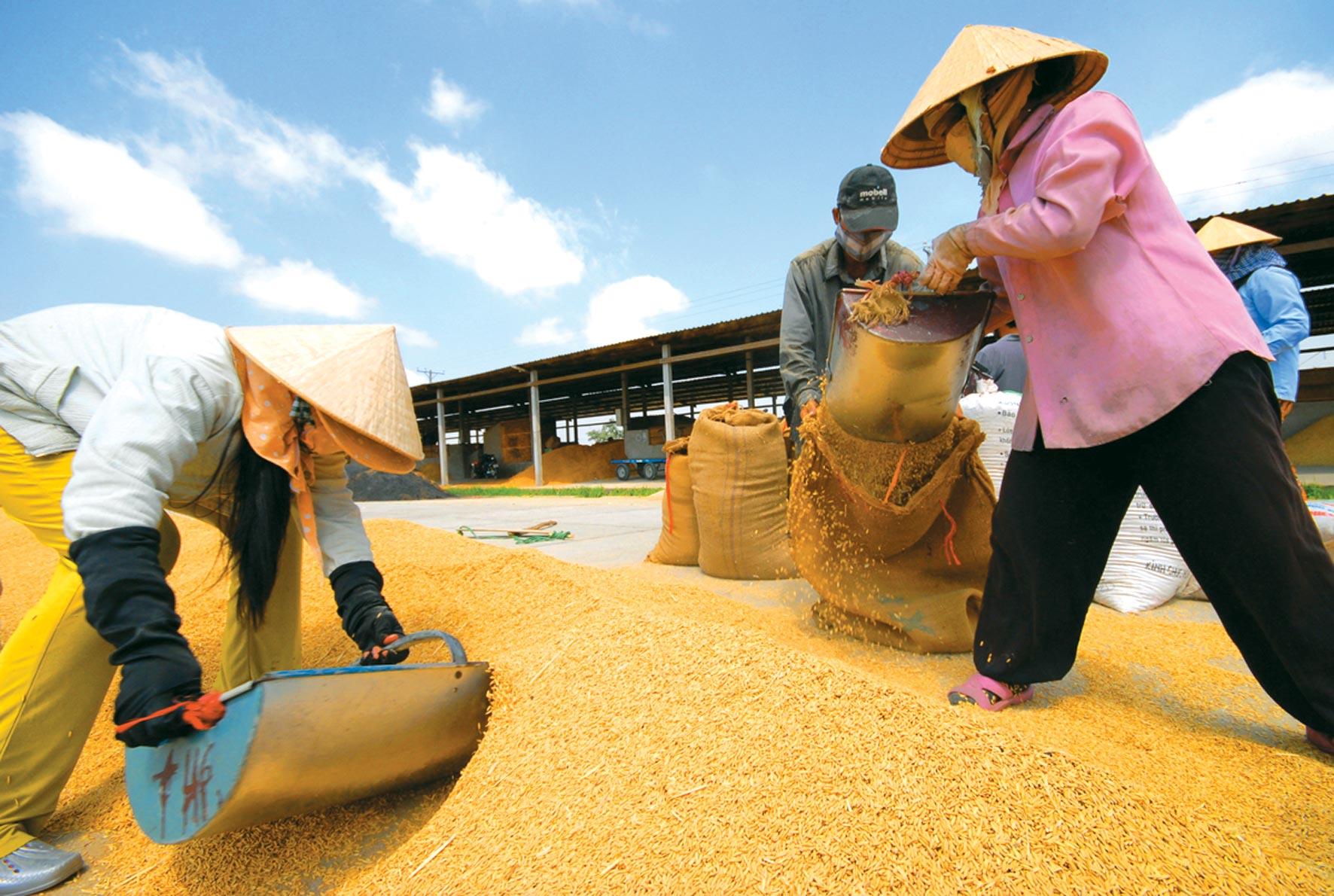 Hàng loạt kiến nghị đưa gạo Việt thành thương hiệu thế giới