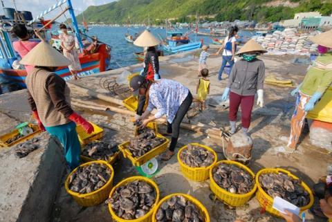 Thương lái Trung Quốc từng thông qua thương lái Việt Nam ở miền Tây thu mua banh lông, loài vốn không có giá trị kinh tế với giá cao ngất ngưởng để người dân đổ xô sắm ngư cụ đánh bắt sau đó biến mất