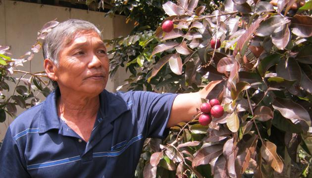 """Dân giàu Việt """"phát sốt"""" vì cây độc, quả lạ"""