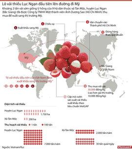 Quy trình xuất khẩu lô vải thiều đầu tiên sang Mỹ