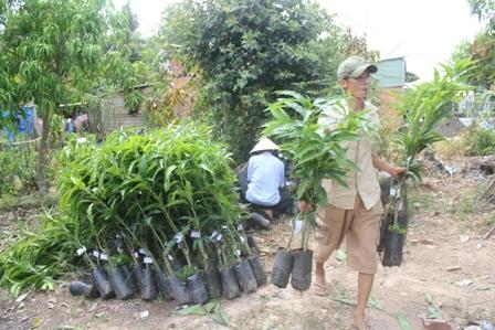 Người dân Cái Mơn (Chợ Lách, Bến Tre) chuyển cây giống đi tiêu thụ