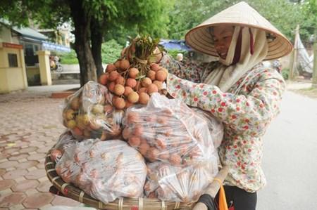 Vải thiều 10.000 đồng/kg bán phổ biến ở Hà Nội