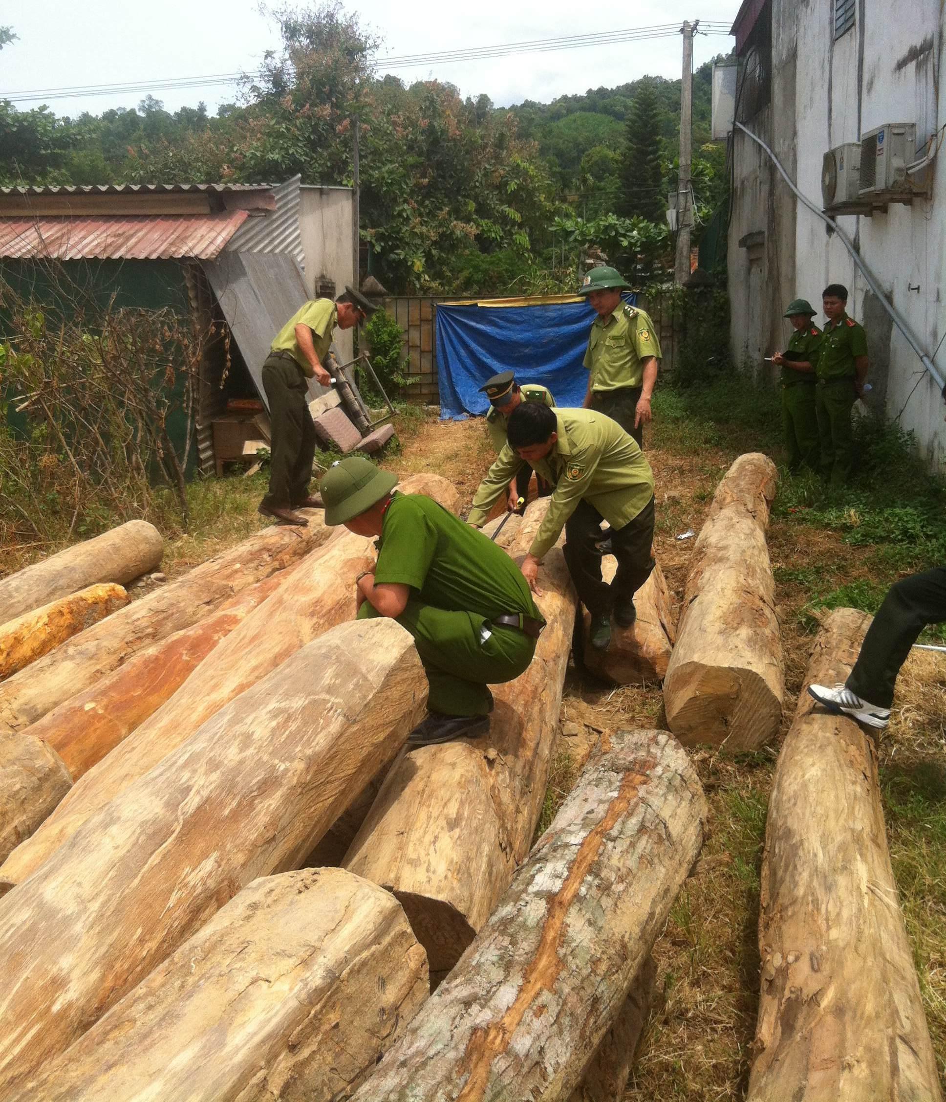 """Thu giữ hơn 8 mét khối gỗ lậu """"vô chủ"""" trên bãi đất trống"""