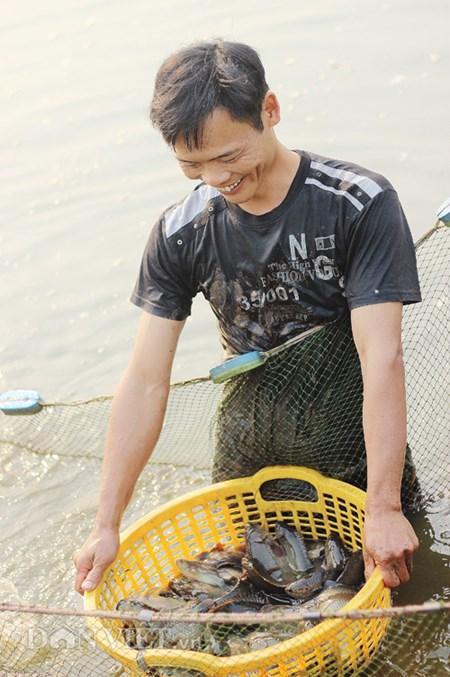 Từ tay trắng, thu trăm triệu mỗi năm nhờ cá rô đồng