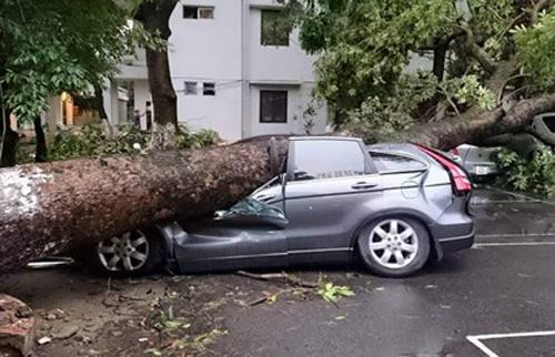 Bảo hiểm chi hơn 4,6 tỷ đồng bồi thường xe
