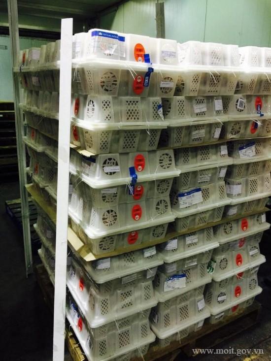 Việt Nam xuất khẩu gần 17 tấn vải đầu tiên sang Úc