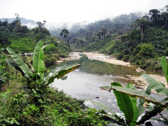 Đề nghị ngừng cho doanh nghiệp Trung Quốc thuê đất rừng