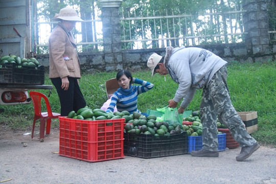Bơ Lâm Đồng được giá, nông dân mừng ra mặt