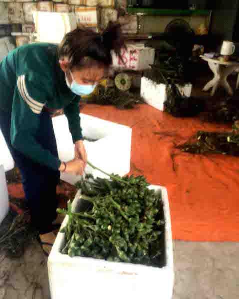 Một điểm tập kết cau non tại huyện Phong Điền trong tháng 5 vừa qua.
