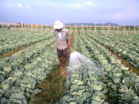 Việt Nam chi 9000 tỷ nhập thuốc trừ sâu và nguyên liệu