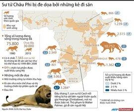 Sư tử châu Phi trước mối đe dọa từ trò thể thao đi săn