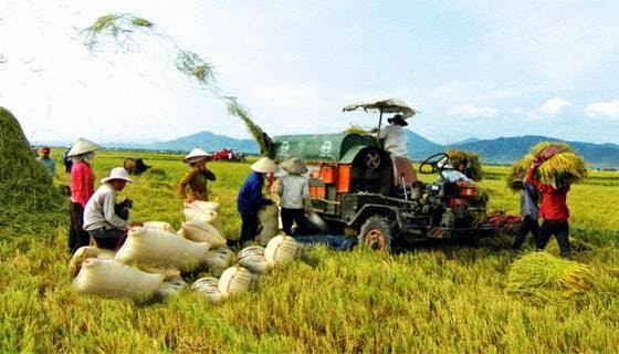 Xuất khẩu các mặt hàng nông sản Việt Nam đang giảm mạnh