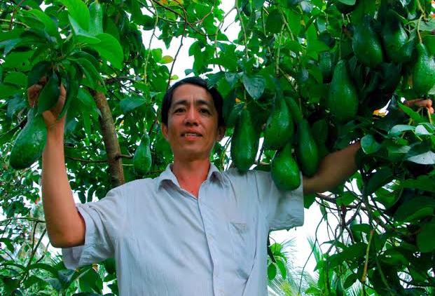 Anh Huỳnh Trần Quốc Phi bên vườn bơ sai trái