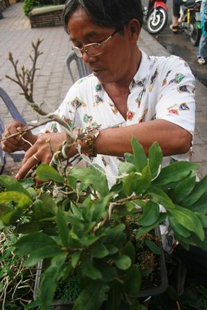 Cúc mâm xôi rất dễ bị hư hỏng nếu gặp mưa trái mùa