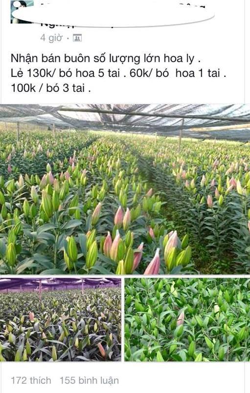 Trên thị trường, hoa ly đang được rao bán với nhiều mức giá khác nhau.