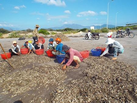 Sau khi thu hoạch, người dân phải chở vào TP.HCM tiêu thụ nên rất tốn kém