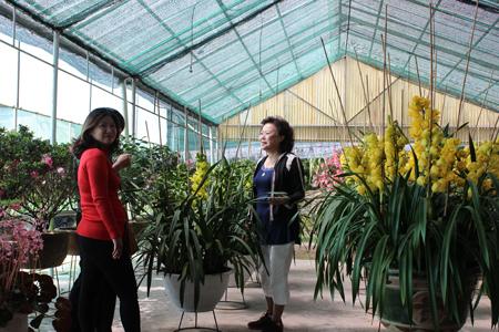 Khách hàng tìm đến tận vườn lan để mua lan theo ý thích